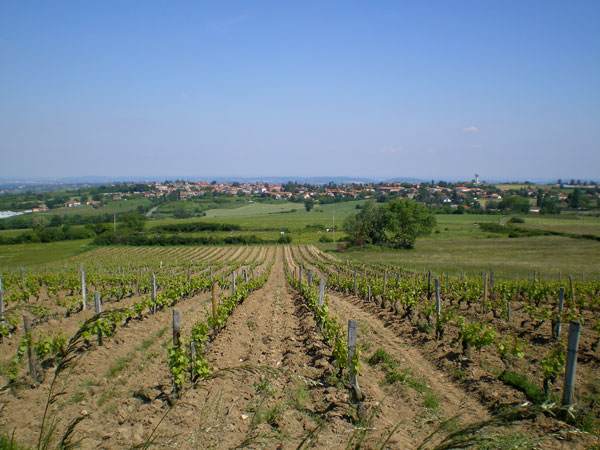 agriculture-vignes